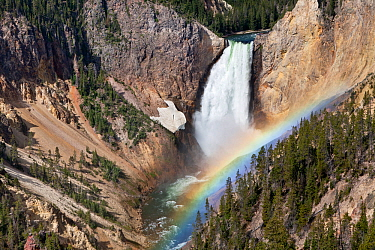 Lower Yellowstone Falls with rainbow, on the Yellowstone River viewed from Lookout Point Trail, Yellowstone National Park, Wyoming, USA, June 2013.