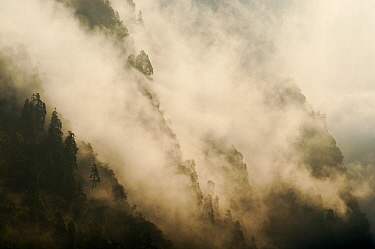 The forests of the Modi Khola river valley shrouded in fog. Annapurna Sanctuary, central Nepal, November 2011.
