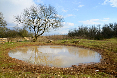Dewpond on the Ridgeway, recently renovated and relined by the Marlborough Downs Nature Improvement Area project, Winterbourne Bassett, Wiltshire, UK, March.