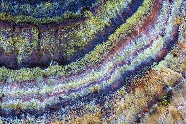 Turkeytail fungus (Trametes / Coriolus versicolor) growing on a dead beech tree. Peak District National Park, Derbyshire, UK. November.