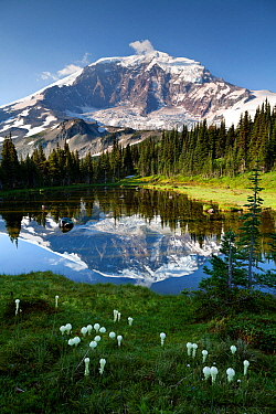 Mount Rainier reflected in tarn above Mystic Lake in Mount Rainier National Park, Washington, USA, August 2014.