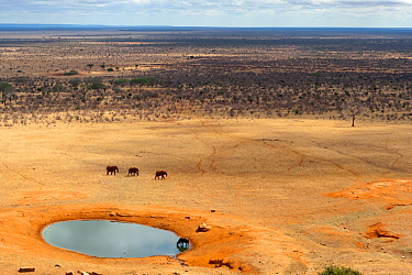 Aerial view of African elephants (Loxodonta africana) and African buffalo (Syncerus caffer) at a water hole during the dry season, Tsavo East National Park, Kenya. October.
