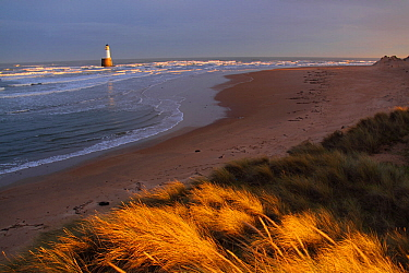 View of Rattray Head Lighthouse across sand dunes, north-east Scotland, January 2014. All non-editorial uses must be cleared individually.