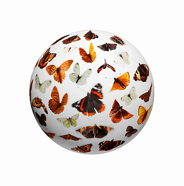 Composite of flying butterflies (Lepidoptera) on sphere.