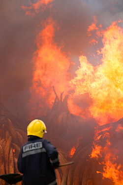 Fireman watching as piles of African elephant ivory are burnt by the Kenya Wildlife Service (KWS). This burn included over 105 tons of elephant ivory, worth over $150 million. Nairobi National Park, K...