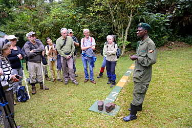 Tourists watching as guide explains the rule to stay at least 7 metres distance from Gorillas, Bwindi Impenetrable Forest, Uganda, February 2016.