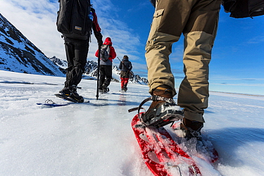 Tourists and guide using snowshoes on an ecotourism trekking holiday, Svalbard, Norway, June, 2012. Model released.