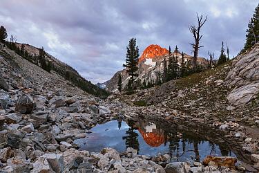 Summit of Mount Regan reflected in small tarn above Sawtooth Lake, Sawtooth Wilderness, Sawtooth National Recreation Area, Idaho, USA. July 2015.