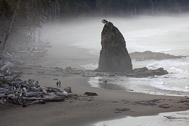 Rialto Beach near Hole-In-The-Wall. Olympic National Park, Washington, USA. August 2015.