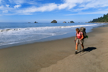 Vicky Spring hiking, Pacific Coast, Olympic National Park south of Toleak Point, Washington, USA. August, 2015. Model released