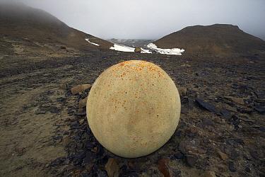Spherical stone on Champ Island, Franz Josef Land, Russia, July 2004.