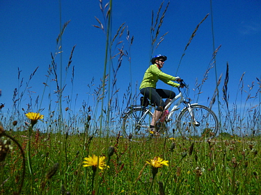 Cyclist riding bike along the 'Saaler Bodden' north-east of Rostock, Germany, June 2013.