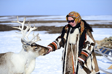 "Carolina Serotetto, Nenet teenager dressed in traditional winter coat made of reindeer skin with  pet ""akva"" Reindeer (Rangifer tarandus). Yar-Sale district, Yamal, Northwest Siberia, Russia. April 20..."