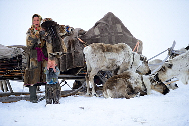 Nenet woman preparing for spring migration dressing herself and her son in traditional winter boots and coat made with reindeer skin. The temperature is below zero. Yar-Sale district, Yamal, Northwest...