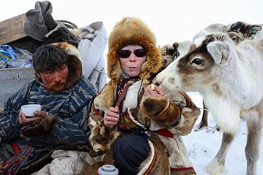 Nenet woman feeding pet avka, reindeer calf (Rangifer tarandus). Yar-Sale district, Yamal, Northwest Siberia, Russia. April 2016.