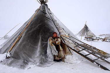 Nenet woman at entrance of tent in blizzard. Yar-Sale district. Yamal, Northwest Siberia, Russia. April  2016.
