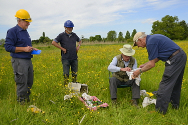 Colin Morris takes a Kestrel chick (Falco tinnunculus) for ringing from a bag held by  Keith Lapham as Barry Gray and Graham Guest look on during a nestbox survey for the the Hawk and Owl Trust's...