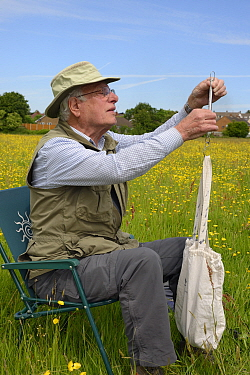 Colin Morris weighing a Kestrel chick( Falco tinnunculus) in a bag during a nestbox survey for the the Hawk and Owl Trust's Kestrel Highways project, Congresbury, Somerset, UK, June. Model release...
