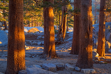 Camping in Big Pine Lakes, Sierra Nevada, Sequoia National Park, California, USA, May