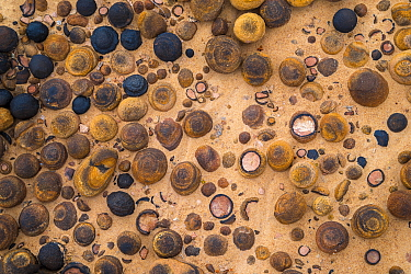 A diverse and natural array of Moqui Marbles on the slickrock landscape of Grand Staircase-Escalante National Monument, Utah, USA, October