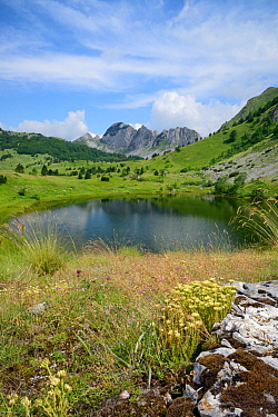 Gornje Bare glacier lake with peaks of the Zelengora mountain range, background and clumps of European stonecrop (Sedum ochroleucum), foreground, Sutjeska National Park, Bosnia and Herzegovina, July 2...