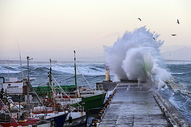 Kalk Bay Habour during a storm, Cape Town, South Africa, April 2015  -  Chris and Monique Fallows