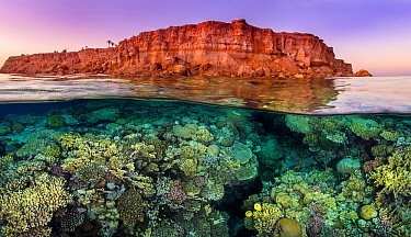 Rich coral growth, with a pair of Exquiste butterflyfish (Chaetodon austriacus), flourishes beneath the barren desert cliffs in the Red Sea. Taken at sunset. Ras Katy, Sinai, Egypt. Gulf of Aqaba, Red...