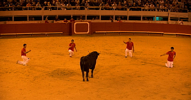 Group of bullfighters in European Bullfighting Championship 2012, Arenes d'Arles, Camargue, France, September 2012.