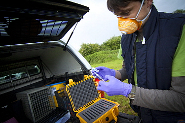Licenced Wildlife Trust vaccinator preparing badger bovine TB vaccine in the field. Vaccine is 'live' and mixed in two parts just before administration. Cheshire, England, UK, May 2013.