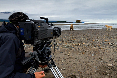 Cameraman filming Grizzly bear (Ursus arctos horribilis) and Grey wolf (Canis lupus) on production for 'Bears'. Katmai National Park, Alaska, July 2012.