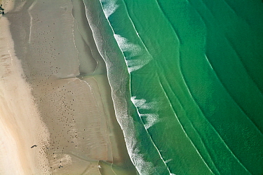 Aerial view of Saint-Michel-en-Grve beach. The green color of water is due to algae (Ulva armoricana) growth caused by nitrogen pollution from agriculture. Cotes d'Armor, Brittany, France, September 2...