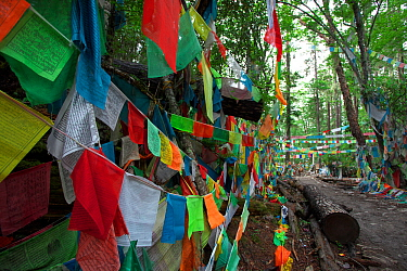 Colourful Tibetan prayer flags featuring the 'wind horse', Kawakarpo Mountain, Meri Snow Mountain National Park, Yunnan Province, China.