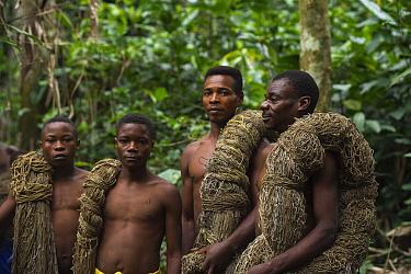 Ba'Kola Pygmies with traditional duiker hunting nets. Mbomo, Odzala-Kokoua National Park, Republic of Congo (Congo-Brazzaville), Africa, June 2013.