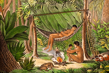 Historical illustration of extinct Puri tribe from North Coast of South America. Mother and child, and man in hammock, with poison dart frog held over fire to collect its toxin, used for poison darts...