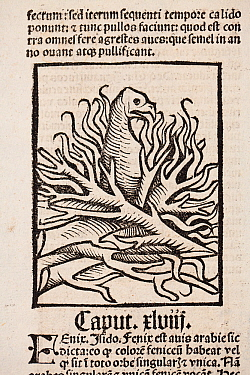 Woodblock illustration of a Phoenix in her nest of fire from Ortus (Hortus) Sanitatis 1491- translated from the Latin as 'Garden of Health'.  The Hortus was the first printed natural history encyclopa...