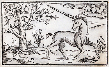 Illustration of a Unicorn, antique woodcut published ca 1560 from the 'Cosmographia' by Sebastian Munster.