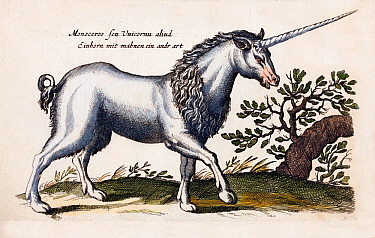 Illustration of mythical Unicorn, also known as Monoceros, by engraver Matthaus Merian 'the Elder', hand coloured copperplate engravings from 'Historia Naturalis',  1657.