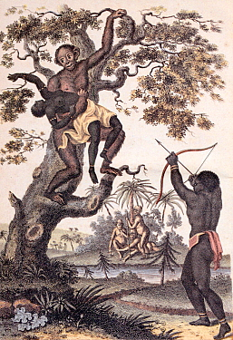 Illustration 'An Orang-Outang carrying off a Negro Girl' Frontispiece from volume two of Sibly 'An universal system of natural history : including the natural history of man, the Orang-Outang and the...