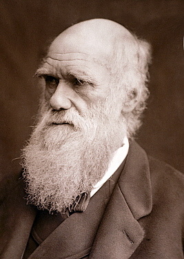 Photograph of Charles Darwin taken by Lock & Whitfield in 1877 and published in' Men of Mark' 1878.