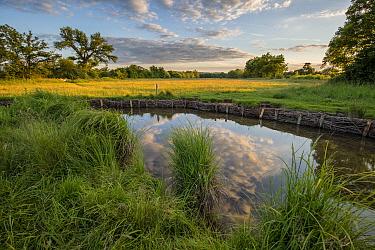 River Eye at Greystones Farm, Gloucestershire Wildlife Trust (GWT), Nature Reserve, Gloucestershire, UK. Riverbank restored with hazel wattles to desilt river. June 2016.