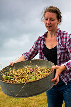 Meadow grassland seed harvesting by the Cotswolds Conservation Board, Syreford, Gloucestershire. July 2015.