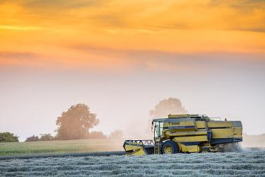 Combine harvester bringing in  wheat harvest, Hawkesbury Upton, Gloucestershire, UK. September 2015.
