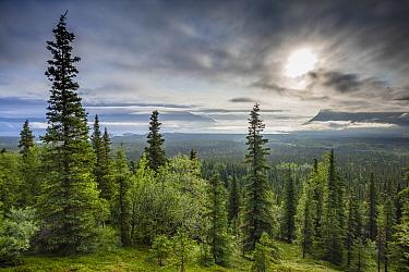 Katmai National Park, Alaska, USA. July 2012.
