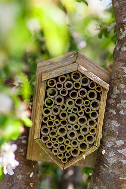 Garden insect box positioned  in  apple tree, Stroud, Gloucestershire, UK. May.