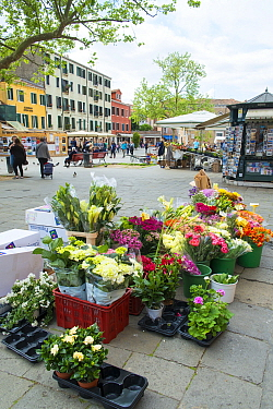 Flower and pottted plants for sale at Campo Santa Margherita, Market Square Venice, Italy, April.