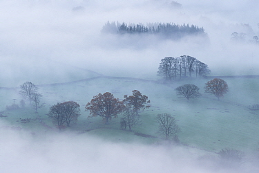 Autumn mist and countryside at dawn, Lake District, Cumbria, England, UK. November 2014.