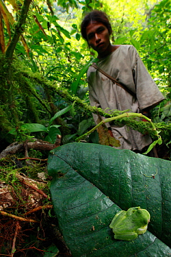 Magdalena Giant Glass Frog (Centrolene tayrona) and Kogi man, Sierra Nevada de Santa Marta, Colombia, January 2011.