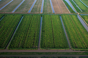 Aerial view of Sugar Cane production, Guyana, South America, December 2015.