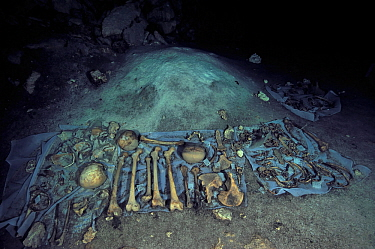 Mayan human and animal skulls and bones, possibly result of human sacrifice to the gods that the Maya culture made and then threw in cenote, pre-Hispanic era, Punta Laguna Cenote, Yucatan peninsula, M...