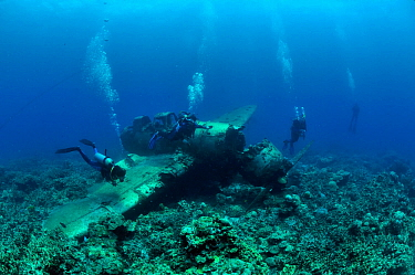 Divers around the wreck of a Japanese Fighter Seaplane, Koror, Palau, Philippines